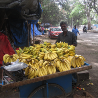 Man standing with his outdoor banana vendor cart