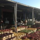 Fruit and vegetable stands at People's Market